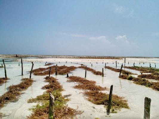 Gezeiten Sansibar holiday2be